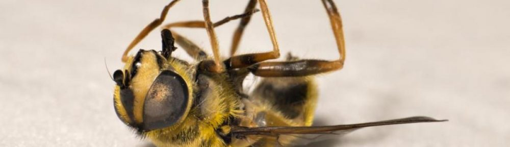 The bees are in danger, and so are we.