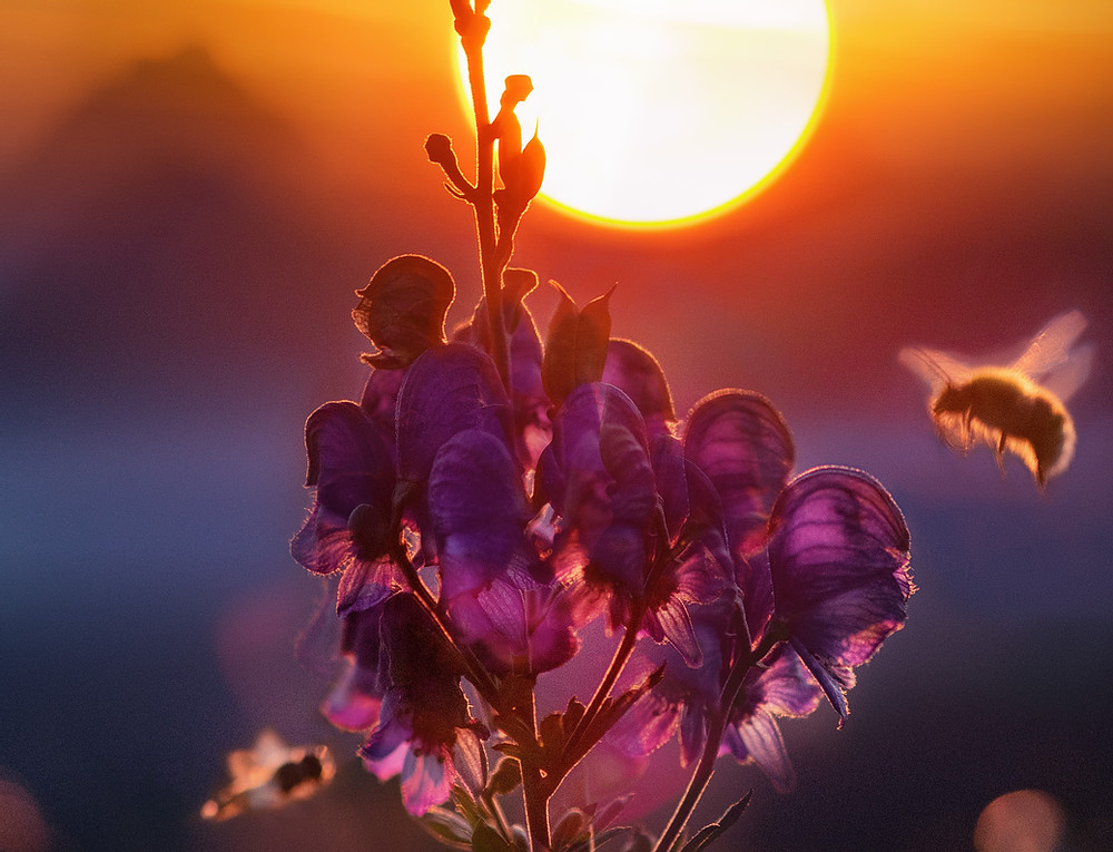 The sun, a great ally to save bees.